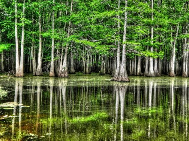 болото фото